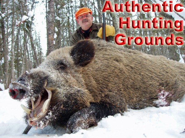 Wild Boar Hunting – Experience Real Snow Hunts