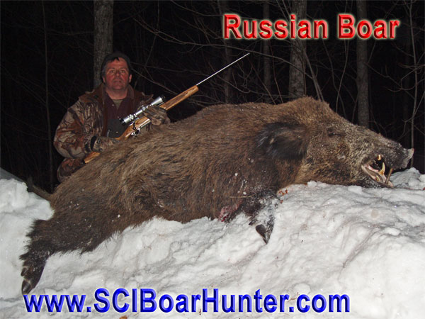 Authentic Russian Boar Hunting in Northern Michigan – Winter